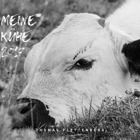 Meine Kühe 2017