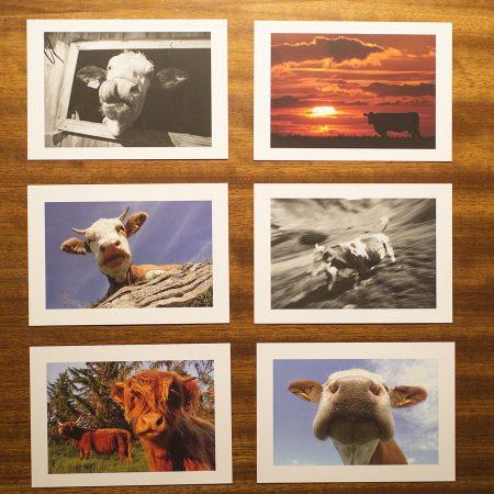 Postkartenset Kuh-Edition 1