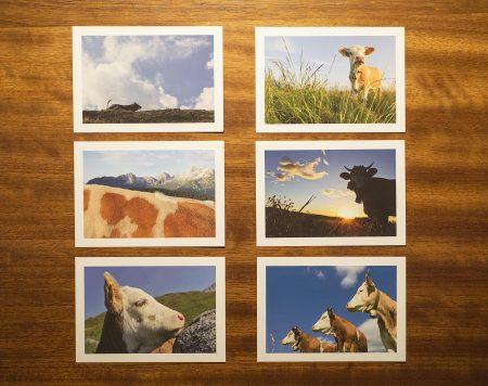 Postkartenset Kuhedition 3