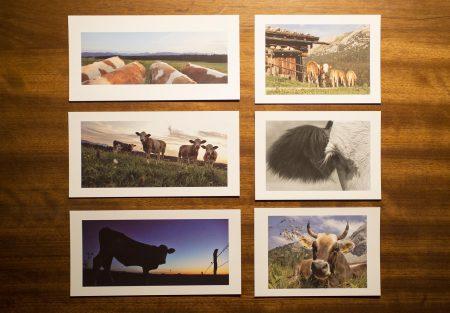 Postkartenset Kuhedition 2